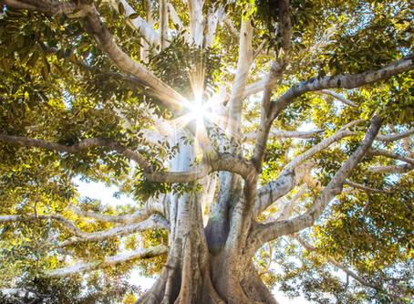 Earthing: Healing Through Reconnection