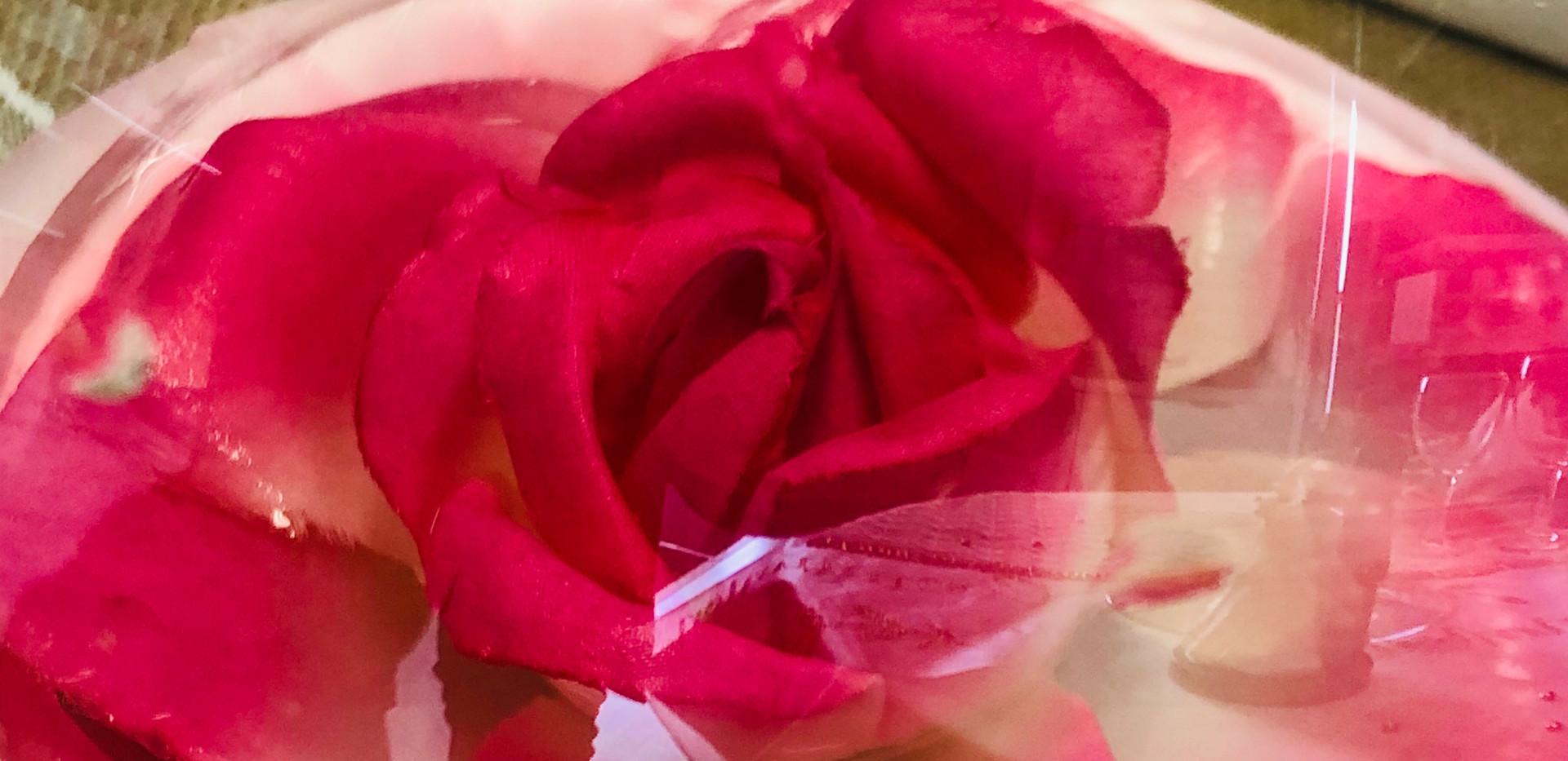 Rose dans ballon.JPG