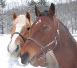 Horses1208A