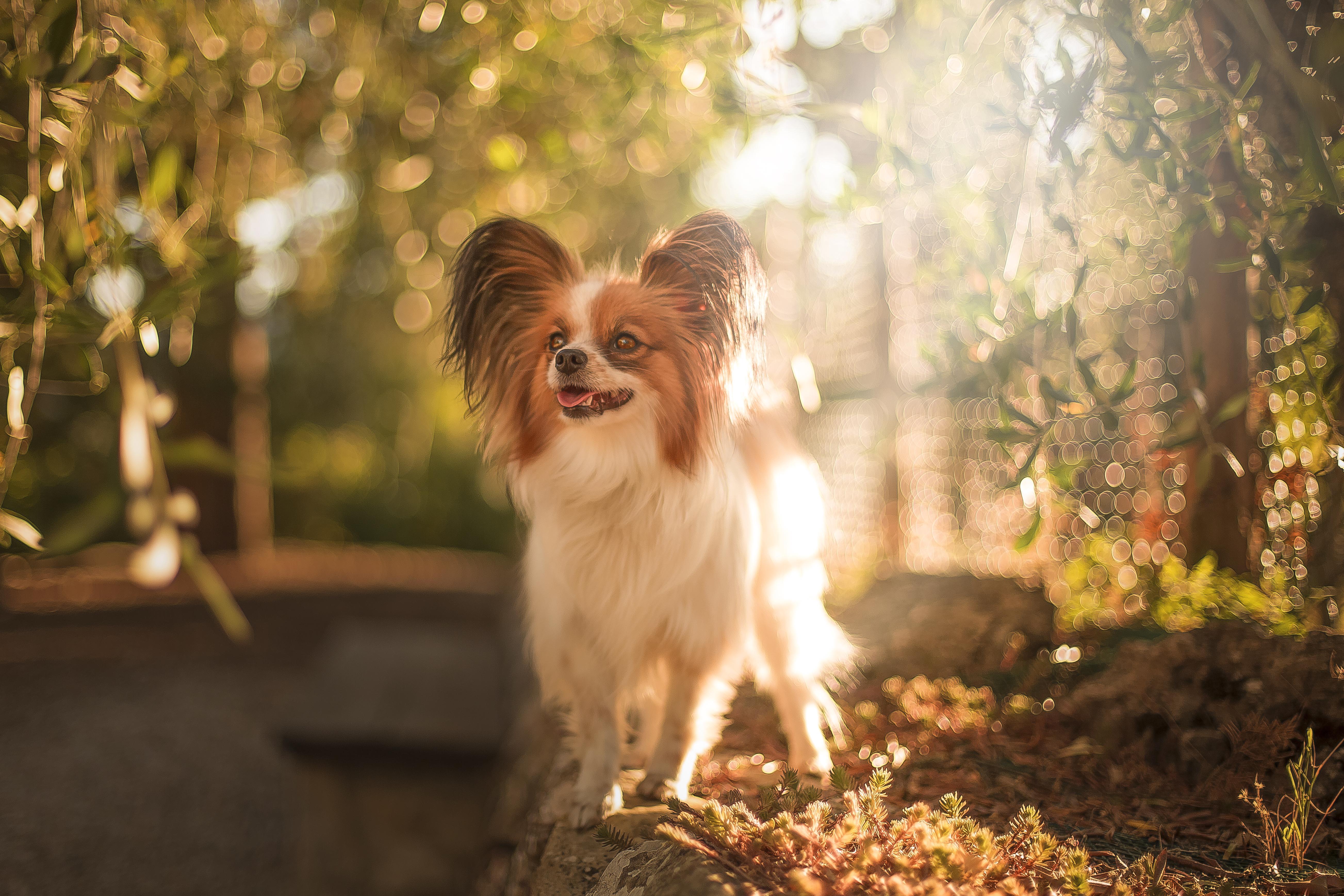Butterfly dog portrait