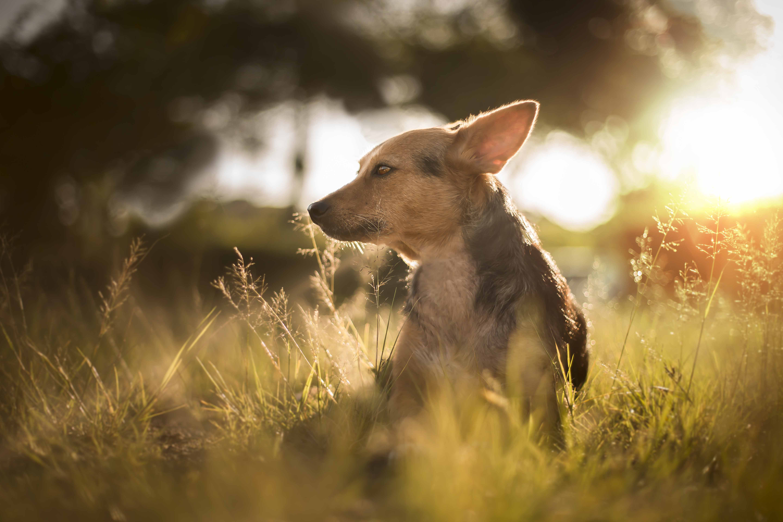 Cachorrinho viralata para adoção