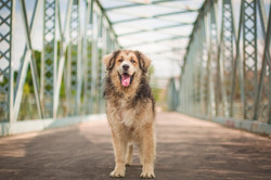 Big beautiful dog (rescued)