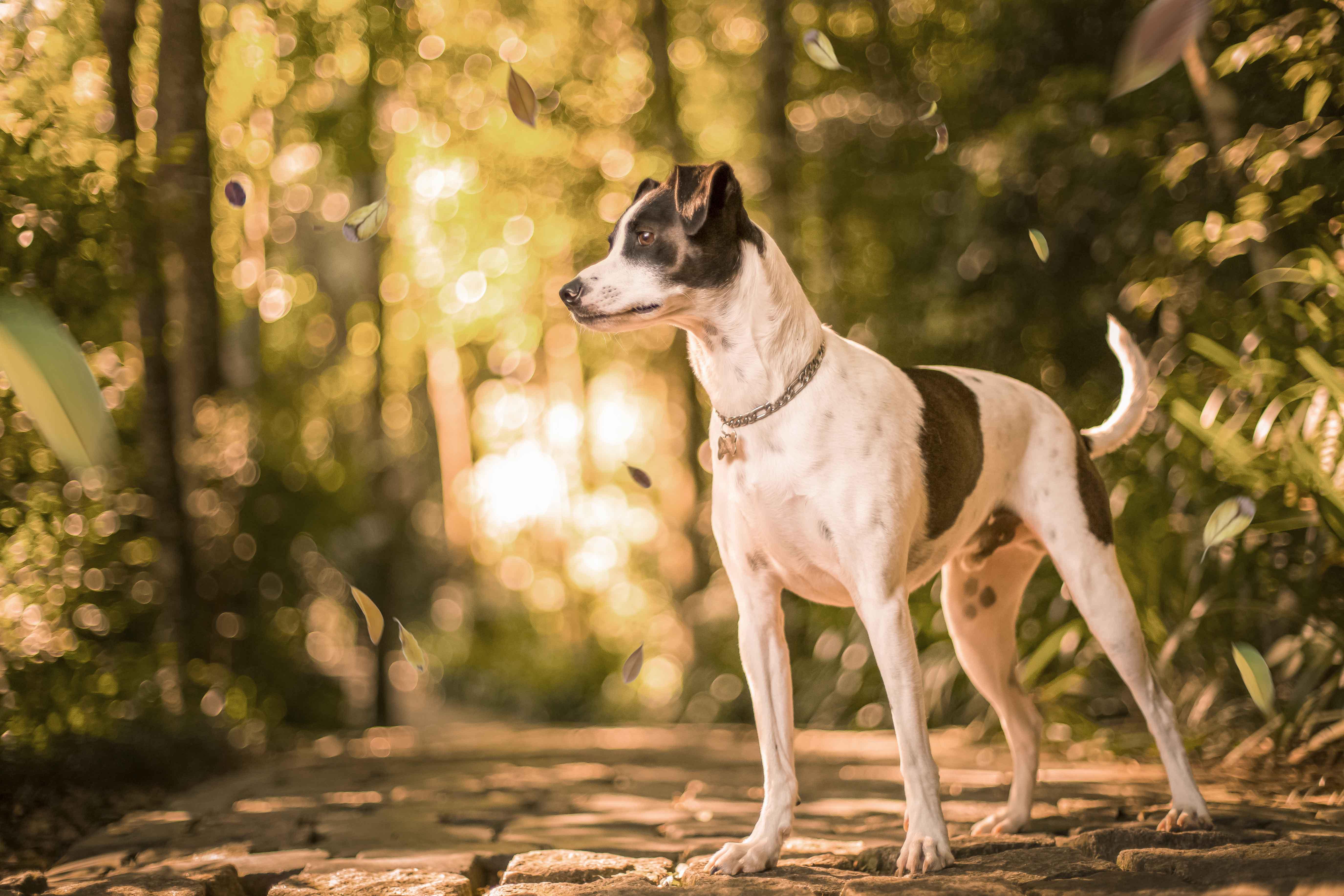 Bailey o cão serelepe