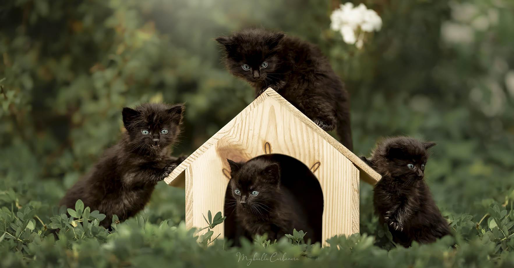 gatinhos pretinhos