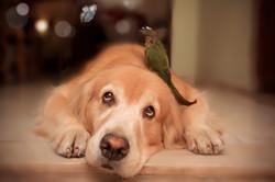 Golden retriever dog and the bird