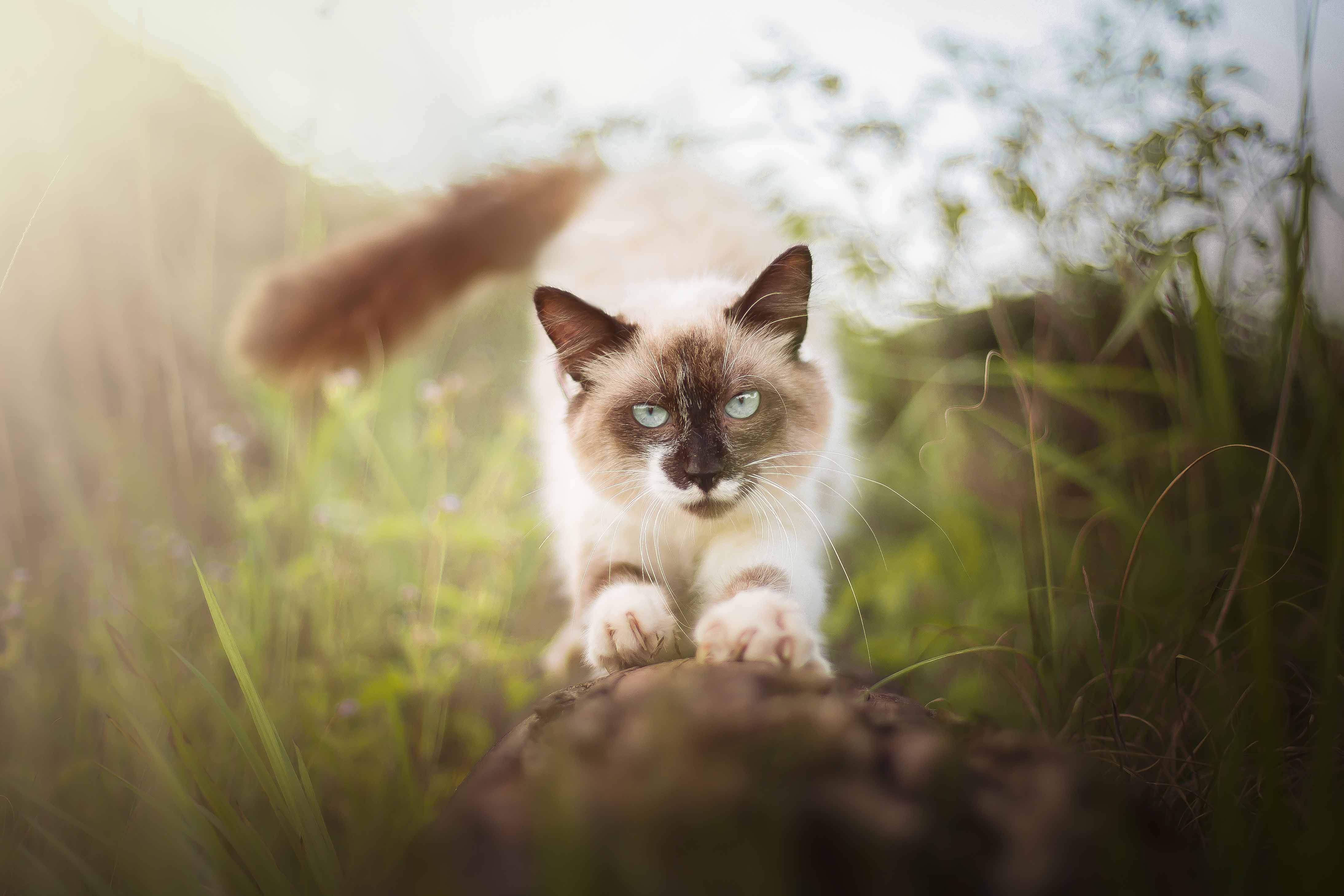 Esse gato lindo é de abrigo!