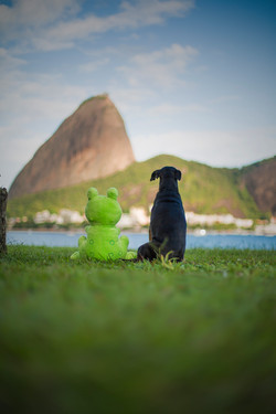 The frog and the dog: best friends