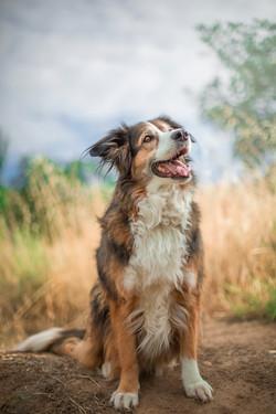 Beautiful dog for adoption