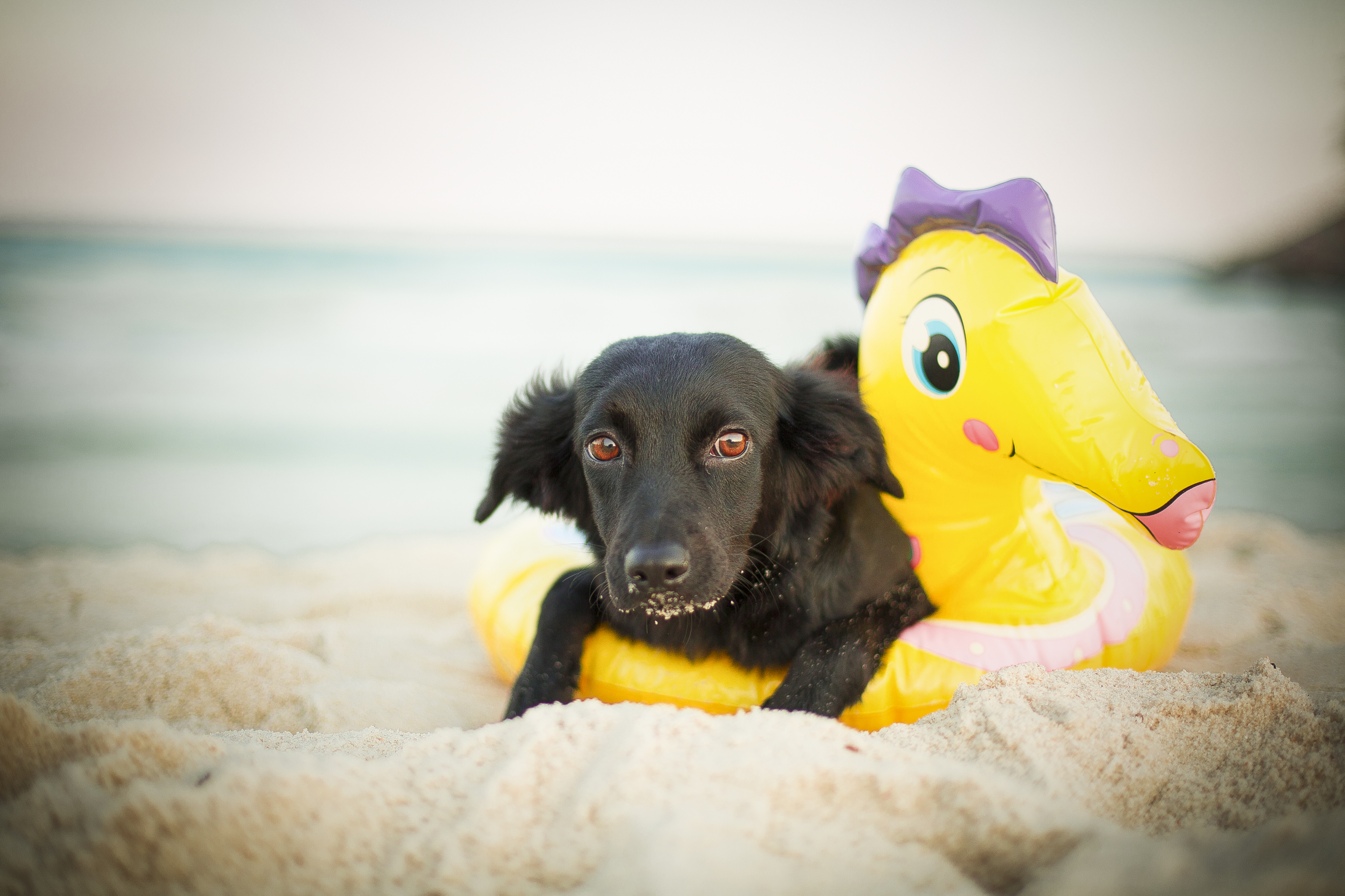 Rescued dog at the beach
