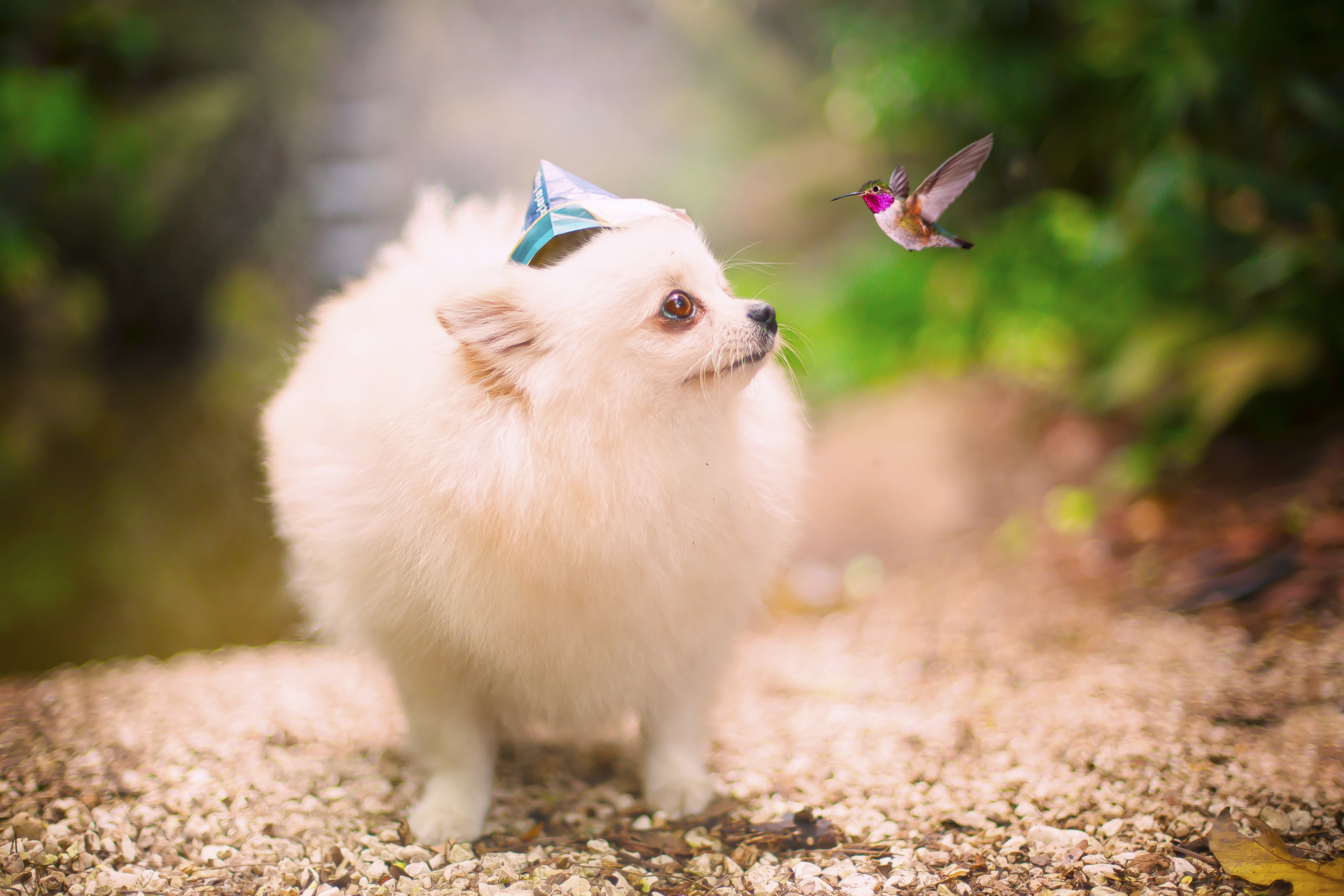The hummingbird and the dog
