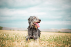 Rescued dog for adoption