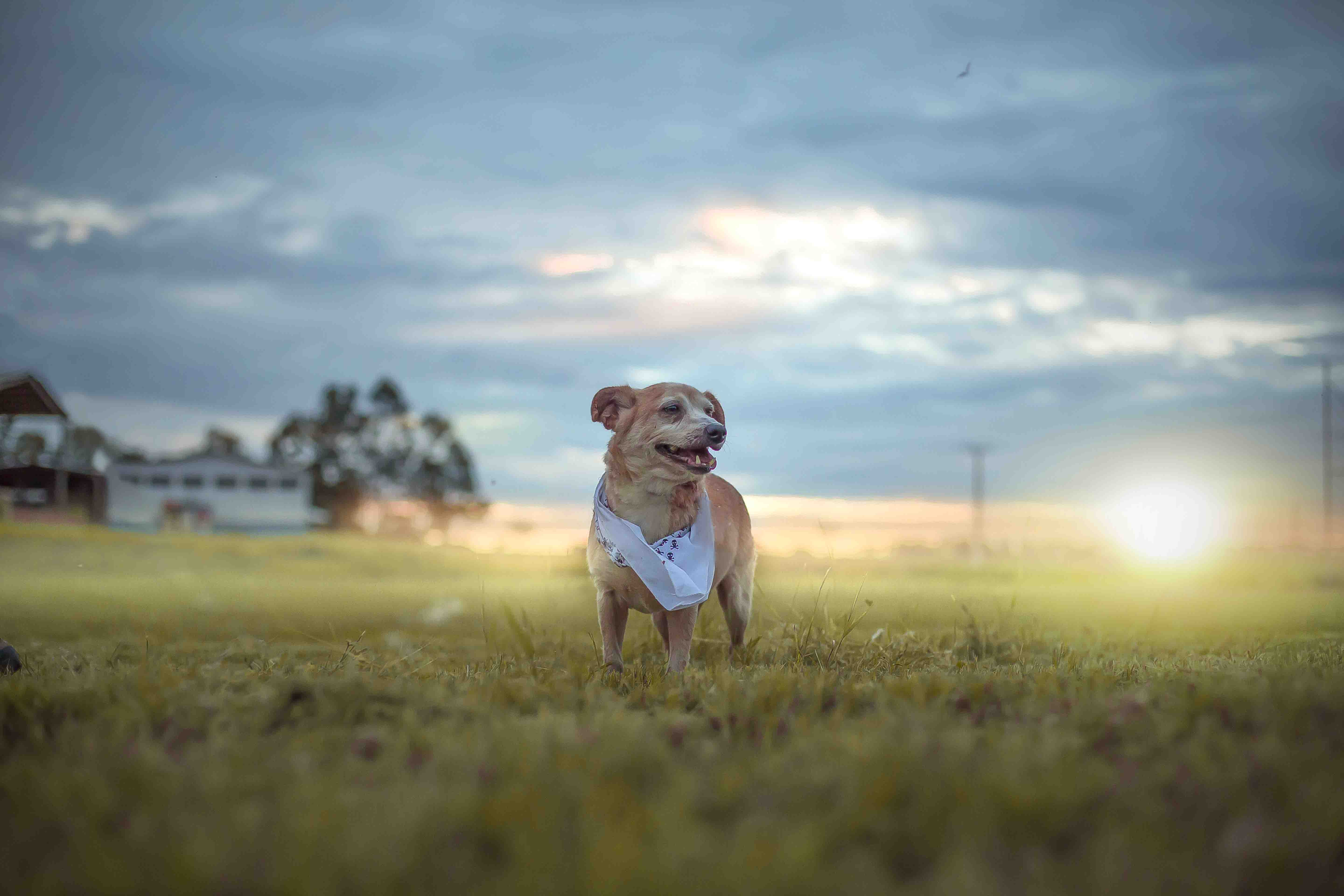 Rescued dog at sunset