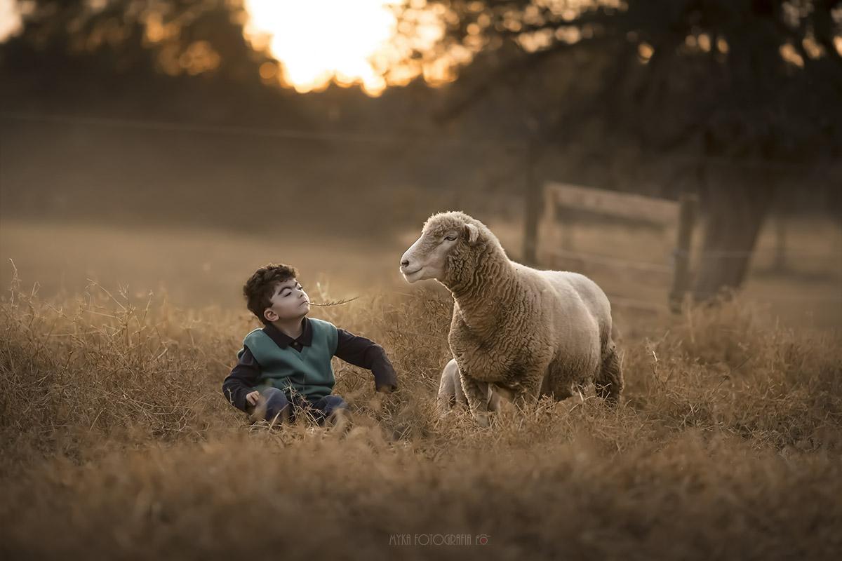 Menino brincando com ovelha