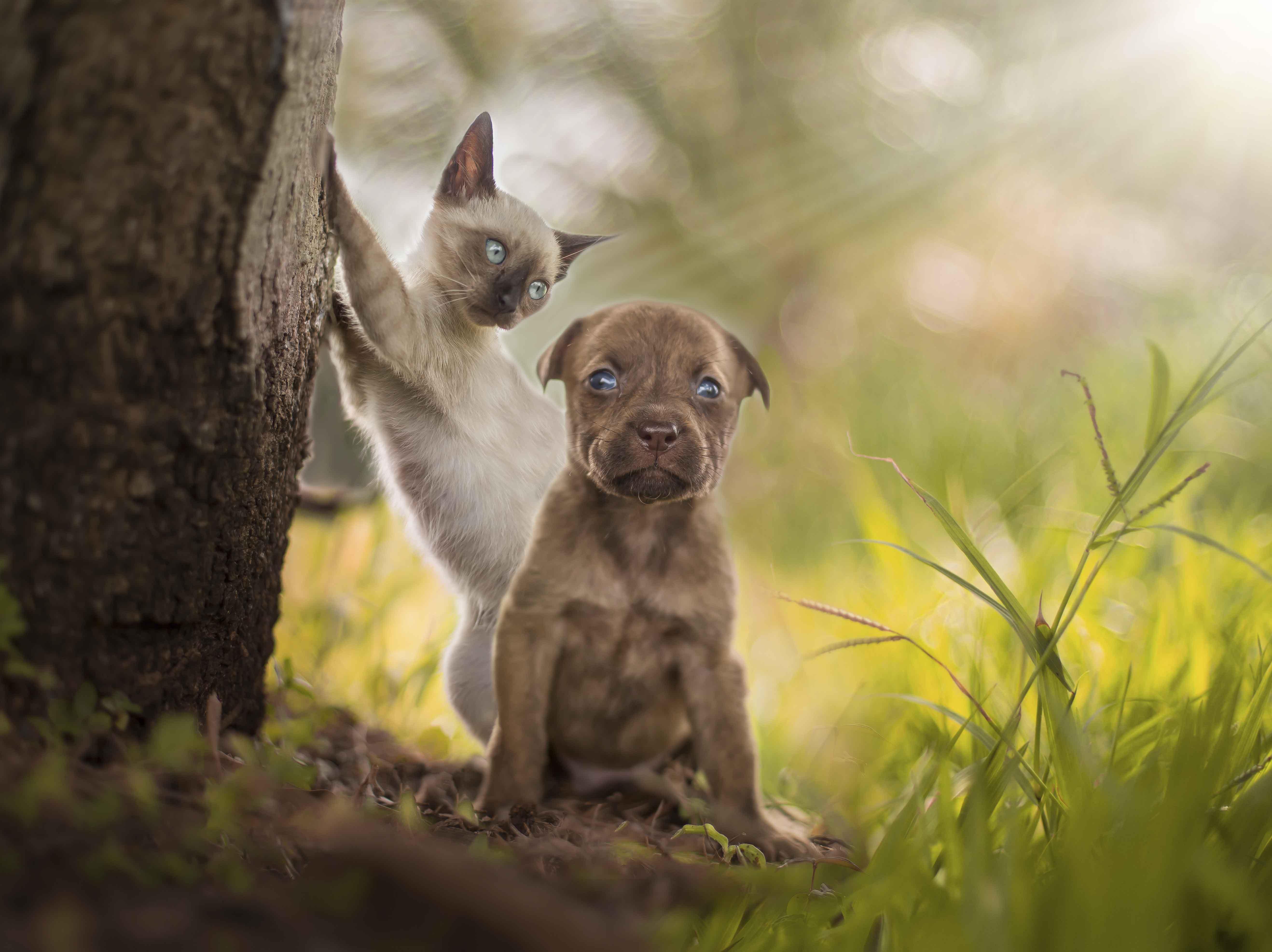 Filhote de gato e cachorro de abrigo