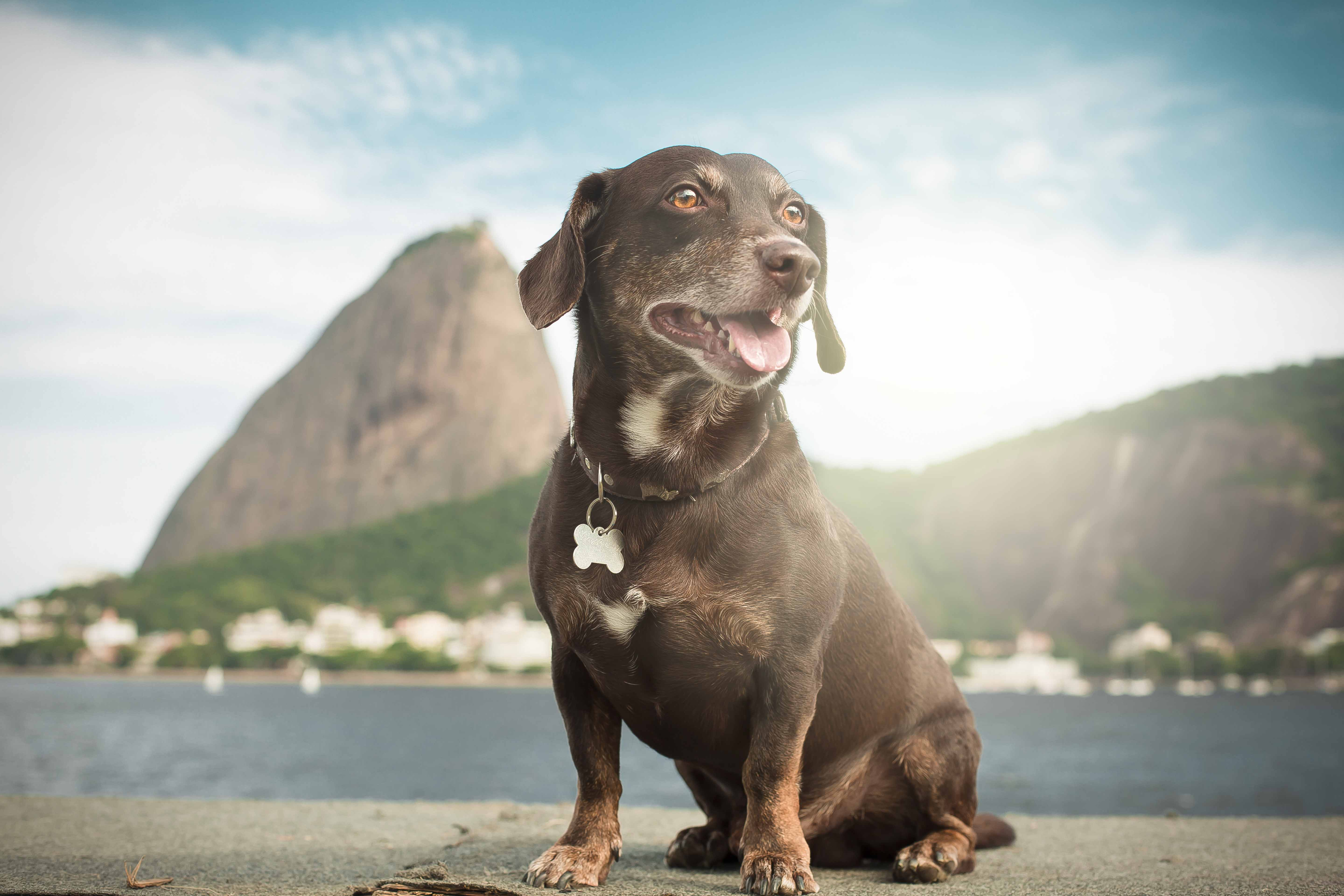 Mutt dog and the sugar loaf