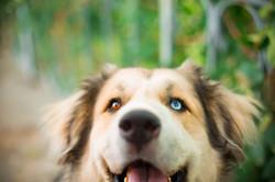 Beautiful dog eyes