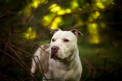Hempstead town animal shelter NYC