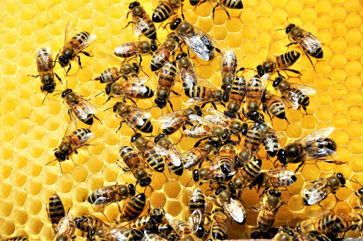 Manos al panal: ¿Cómo ayudar a las abejas?