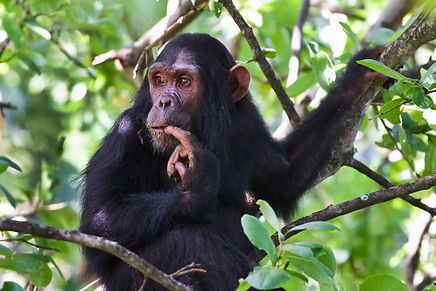 © the Jane Goodall Institute/By Carlos D
