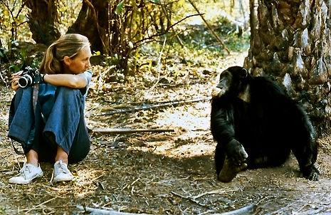 © the Jane Goodall Institute/By Derek Br