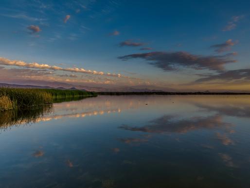 Laguna de Batuco sería declarada Santuario de la Naturaleza