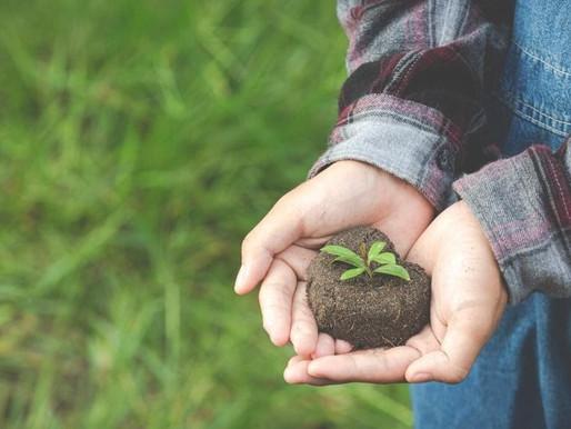 Restauración de los Ecosistemas: Día Mundial del Medio Ambiente