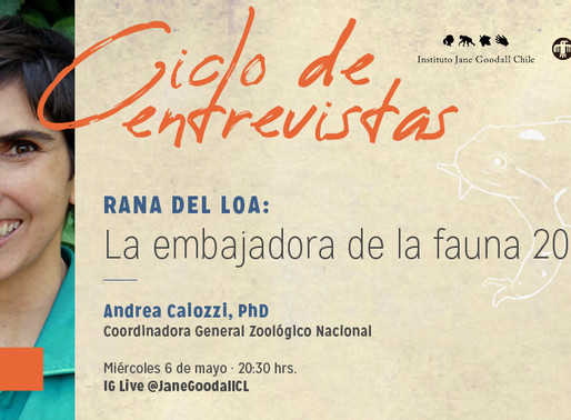 Ciclo de entrevistas Instituto Jane Goodall Chile: rana del Loa