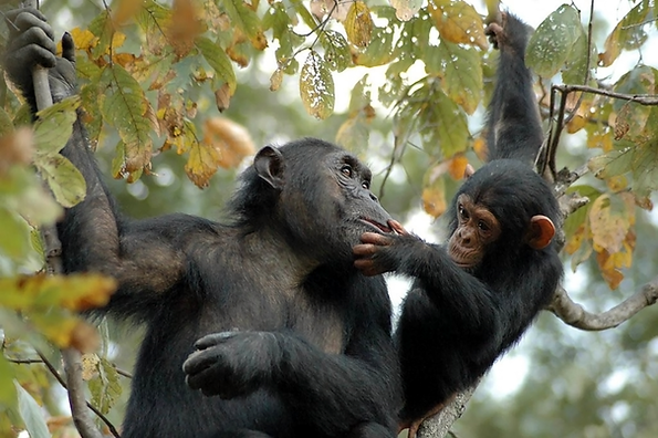 © the Jane Goodall Institute_By Anna Mos