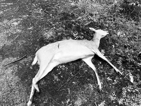 まりもの日記「必死に生きる-初めての狩猟現場-」
