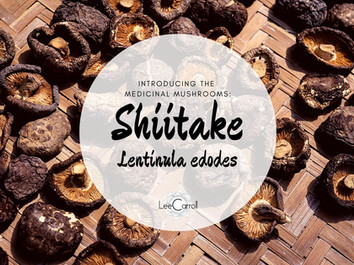 Introducing... Shiitake!