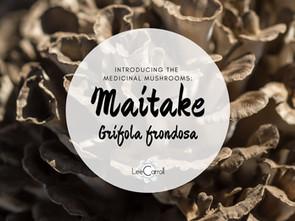 Introducing... Maitake!