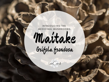 Introducing... Maitake!