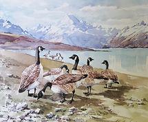 174 Geese Lake Pukaki.jpg