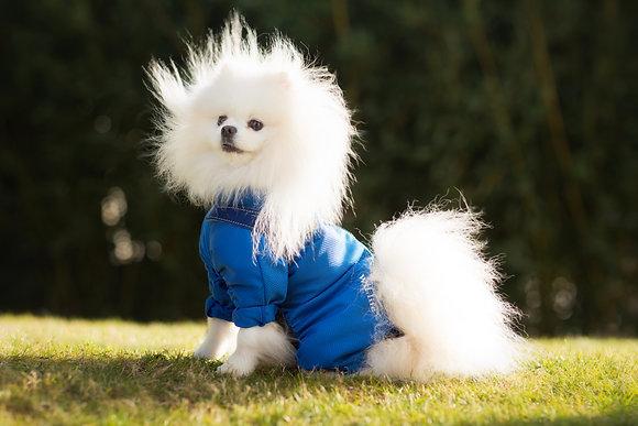 Body pour chien de petite taille Wil.life