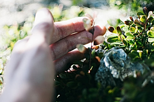 hand in nature.jpg