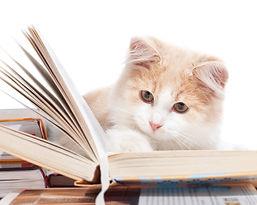 Little cat read a book.jpg