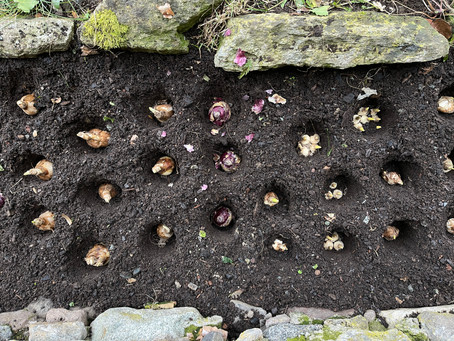 Garden rituals on January