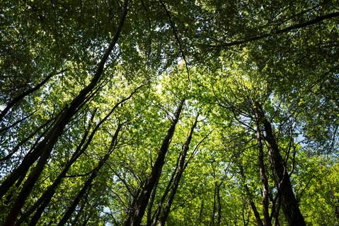 Casagalleria_Montegeneroso_Natura2020_Mo