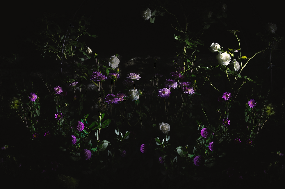 black secret garden night dream 01_edited.png