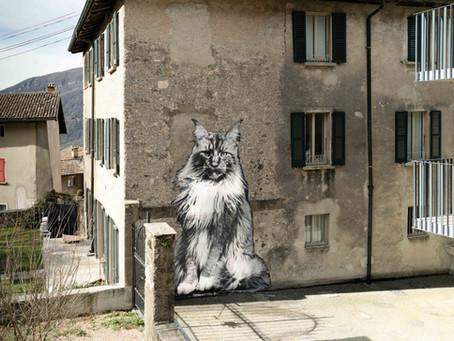 """Street Art Exhibition """"I Gatti di Rovio"""" by Yuri Catania"""
