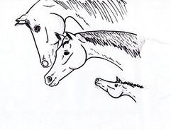 Why I do horses?