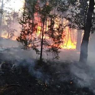 Por sequía, reactiva Guachochi combate a incendios forestales