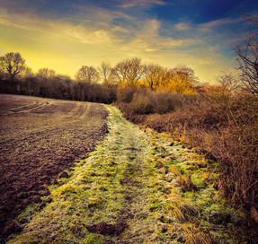 A Winters Trail