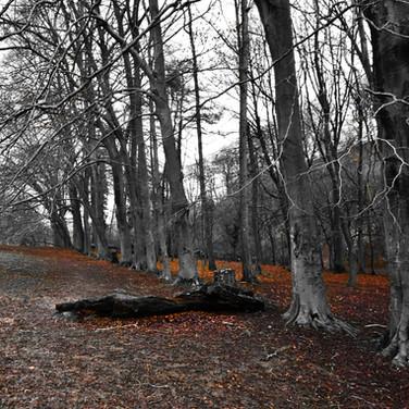 English Trees