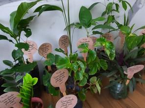 Oncobem realiza distribuição de mudas e plantas