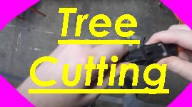 tree cutting.jpg