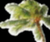 椰子の木の写真