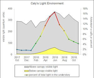Caly's Light Environment