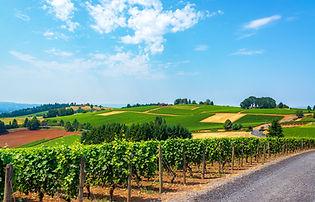Oregon VOregon vineyards shutterstock_29