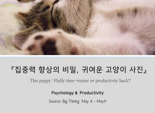 『집중력 향상의 비밀, 귀여운 고양이 사진』